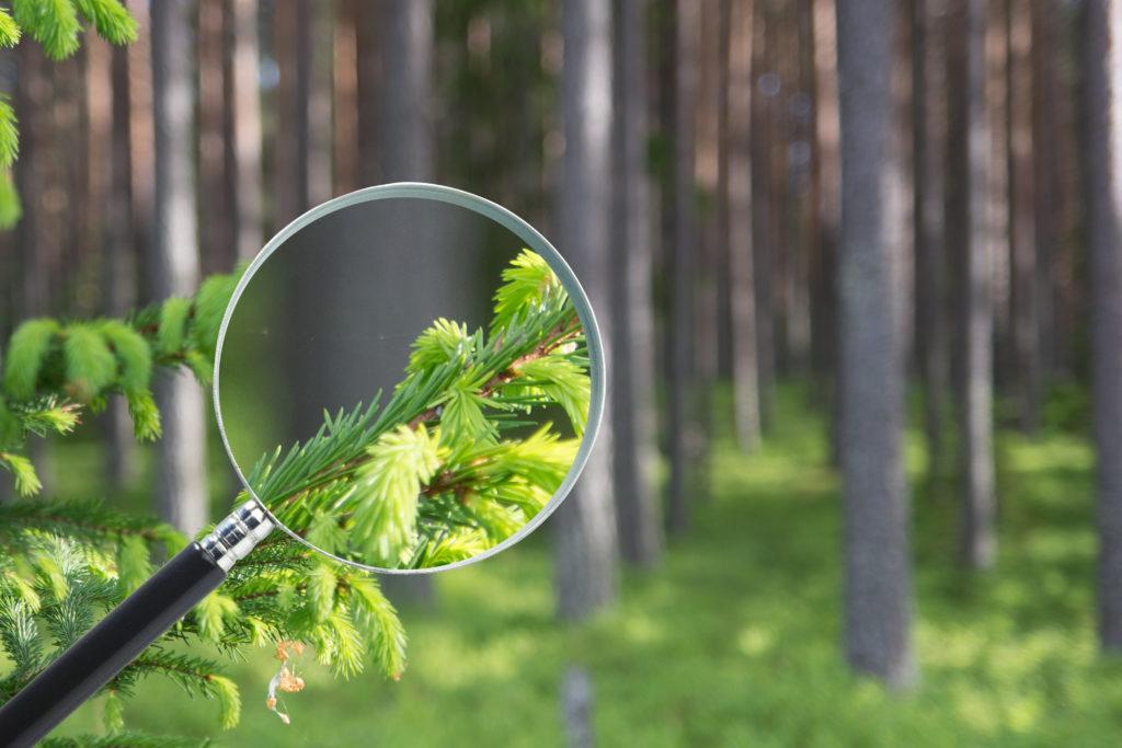 Skog_med_förstoringsglas