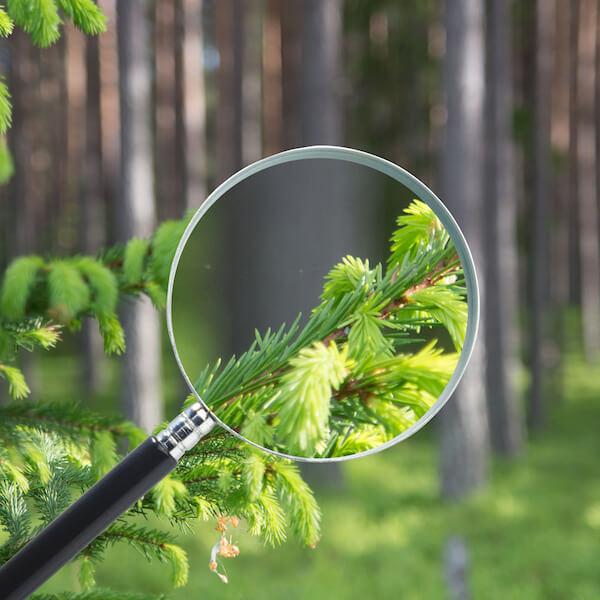 Nyfiken på skog