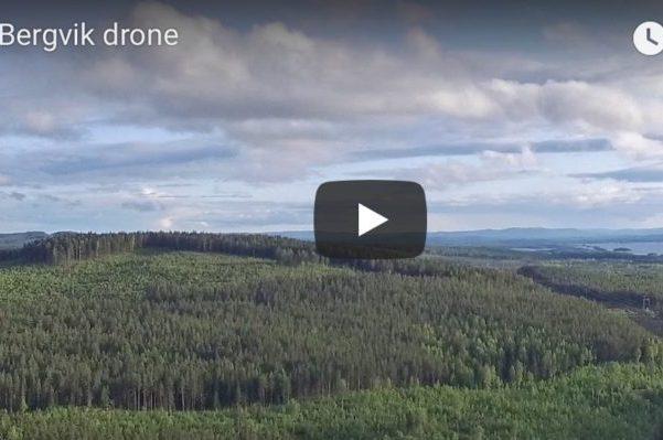 Bergvik skog drönarfoto