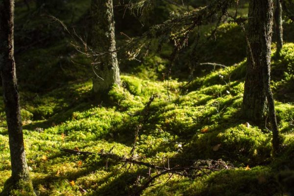 Naturfoto I Naturreservat
