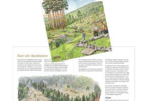 Stora Enso Skog Miljöhänsyn Vid Avverkning
